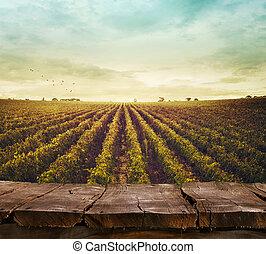 vignoble, dans, automne