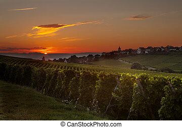 vignoble, levers de soleil