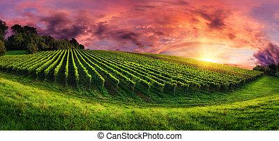 vignoble, panorama, magnifique, coucher soleil