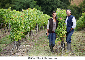 vignoble, pose couples