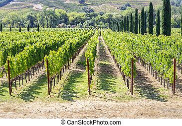 vignoble, vallée, vallonné, napa, secteur