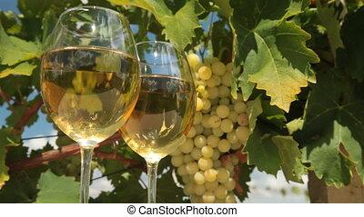 vignoble, vin blanc, lunettes