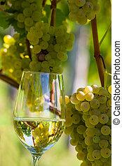 vignoble, vin verre