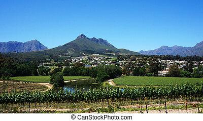 vignobles, dans, cap ouest, afrique sud