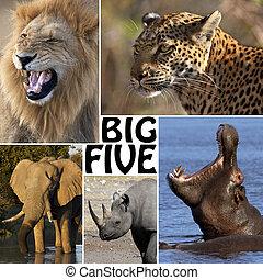 vijf, groot, -, safari, afrikaan