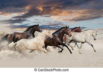 vijf, paarde, uitvoeren, galop