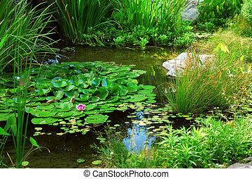 vijver, landscaping