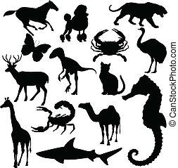 világ, vektor, állat