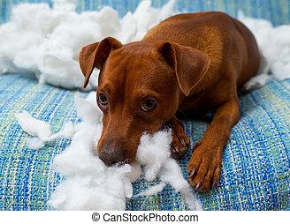 vilain, après, chien, espiègle, mordre, chiot, oreiller