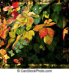 vild blomma, trädgård, med, morgon, solljus