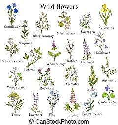 vild blommar, färg, sätta