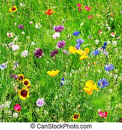 vild blomstrer