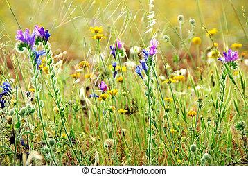 vild blomstrer, på, portugisisk, felt