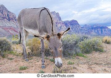 vild, burro