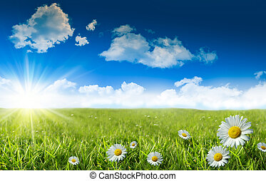 vild, daisies, ind, den, græs, hos, en, blå himmel