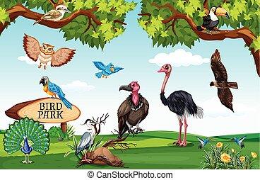 vild, fält, djuren