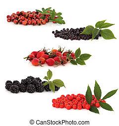 vild, frukt, kollektion