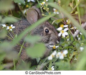 vild, kanin