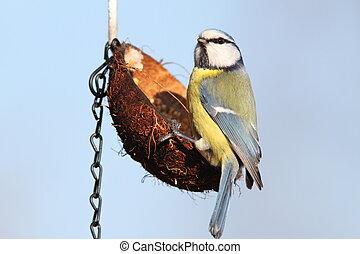 vild, lille, fugl, have, feeder