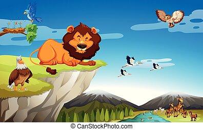 vild, många, djuren, klippa