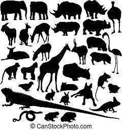 vild, silhouettes, vektor, djur
