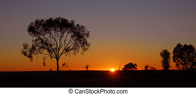 vildmark, australien, soluppgång