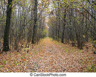 vildmark, väg, in, höst skog