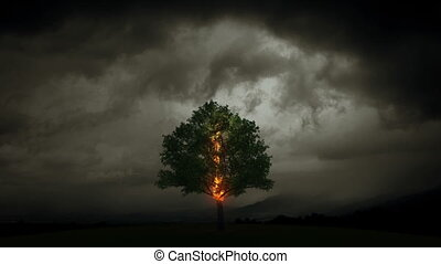 villámlás, elég, egy, fa