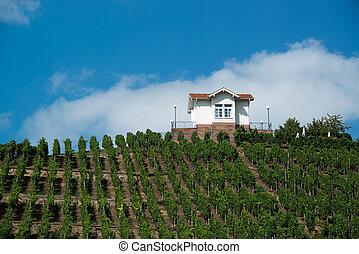 Villa in vineyards - Villa above vineyards on a hill in...