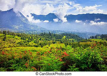 Village and Cliff at Bromo Volcano in Tengger Semeru, Java,...