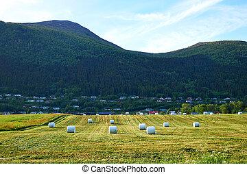 village, dans, norvège
