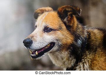 village dog - rustic dog on a leash, portrait