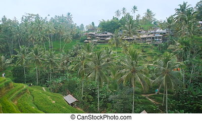 Village is built on a green hill in the jungle. Many small and low houses are next to each other on a beautiful tropical island. Interesting tourist route.