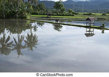 village panaroma on South Sulawesi - rice field panaroma on ...