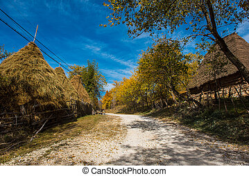 Village road and autumn forest