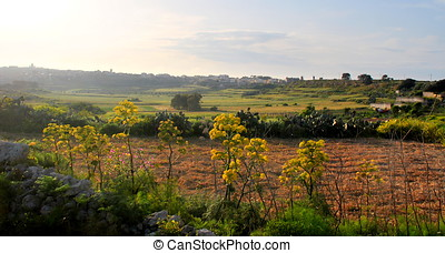 Village surrounded by fields.