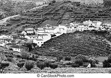 Village Surrounded by Vineyards