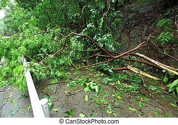 ville, après, typhon, demaged