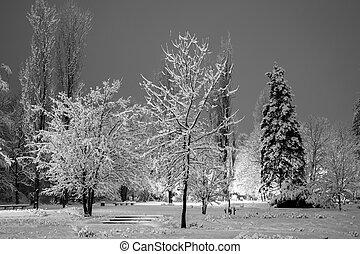 ville, evening., parc, hiver