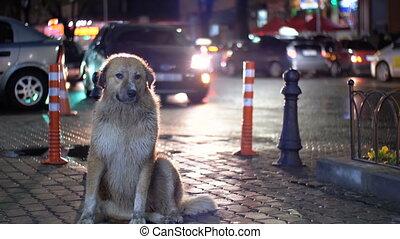 ville, gens sans abri, voitures, chien, rue, fond, nuit, dépassement, assied