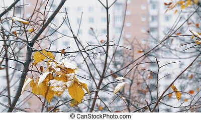 ville, leaves., sec, hiver, peu, arbre, neige