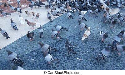 ville, manger, pigeons, park., dehors, troupeau, pain
