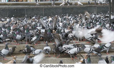 ville, manger, pigeons, rue, dehors, troupeau, pain