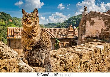 ville, mur, pierre, curieux, chat