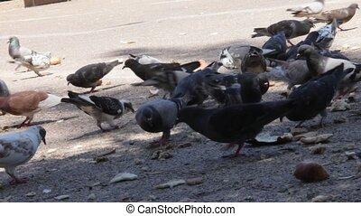 ville, pigeons, troupeau
