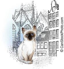 ville, propriétaires, solitaire, hiver, attente, chaton, thaï