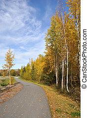 ville, sentier, vélo, automne