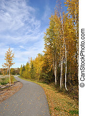 ville, sentier vélo, dans, les, automne