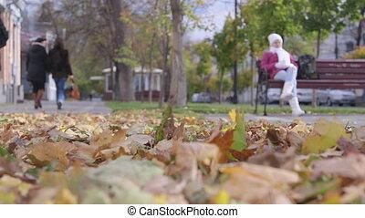 ville, venteux, rue, jour, automne