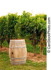 vin pipa, hos, vingård